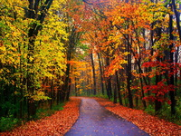 road-in-autumn-forest