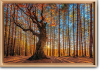 the-king-of-the-forest-evgeni--dinev-