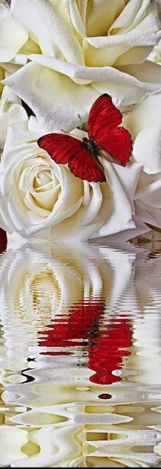 d9c27652790128a563bdc49efdd8a621--send-flowers-pretty-flowers