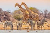 9476-2-namibie-parc-national-d-etosha-c-pytyczech