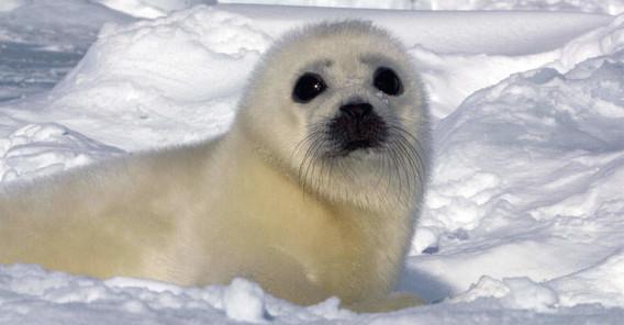 seal7