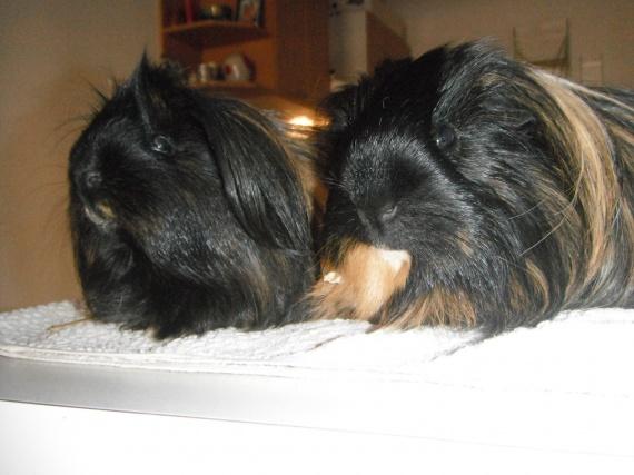 Daisy & Dony
