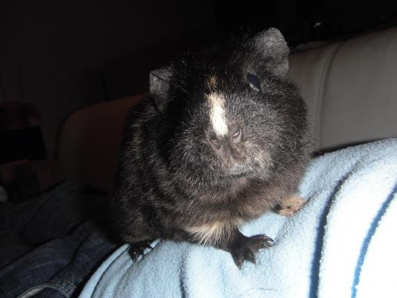 Jolie cochon