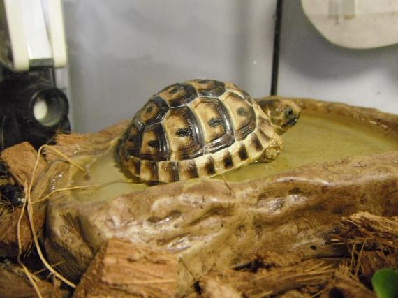 Donatella se rafraichit dans son bassin