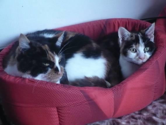 Mes deux chats !
