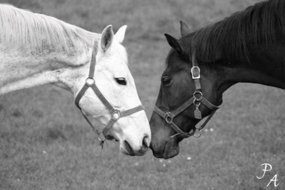 Bienvenidos al nuevo foro de apoyo a Noe #269 / 22.06.15 ~ 26.06.15 - Página 2 Images-chevaux_by_pixiis-img