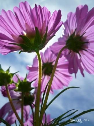 petites-fleurs-1667467-photo1400755-6b978_big-img
