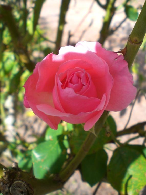 ma petite fleur...