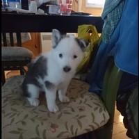 Kira 1 mois