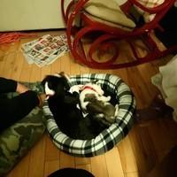 Kira et Louna dormants tous les deux