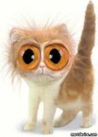 les gros yeux .....
