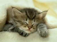 Dormez bien .... bisous