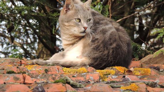 ROMEO sur un toit