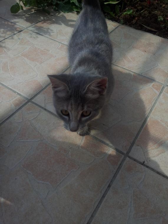 Mon chat Kiara