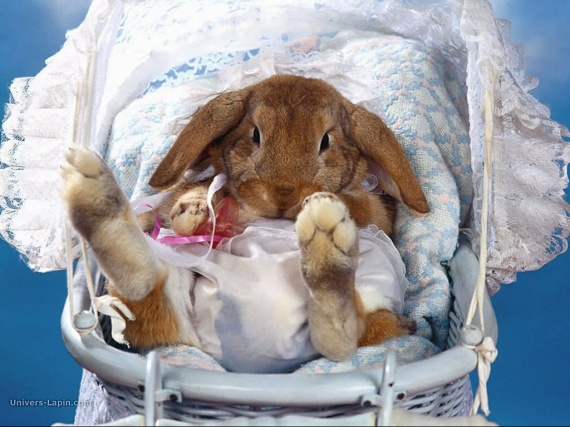 real_4035_rabbit-wallpaper-010-1024