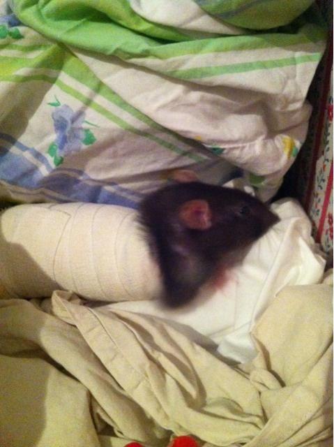 Le rat saucisson - Protéger une plaie après opération - Page 5 Private-category-2012-20_22-44-img