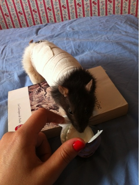 Le rat saucisson - Protéger une plaie après opération - Page 5 Private-category-2012-21_19-32-img