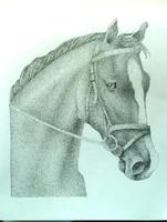 Dotwork cheval 2