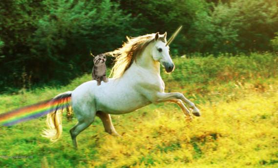 cat_riding_unicorn_by_ithlia-d4wyzfu