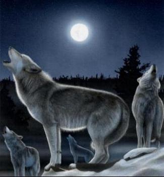 moonwolven