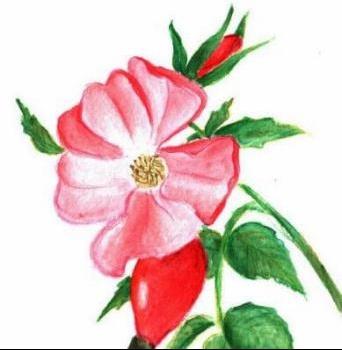fleurrose