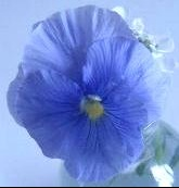 bleu%20odeur