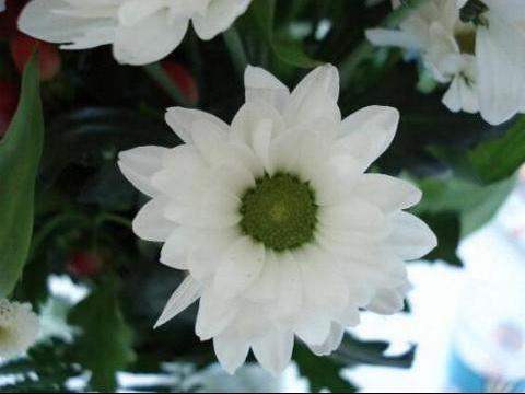 fleur%20blanche