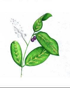 plante01