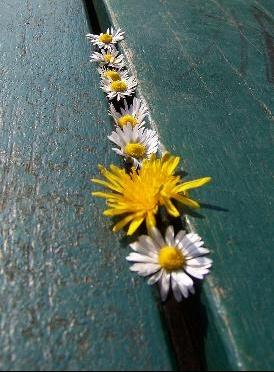 fleurs%20champs