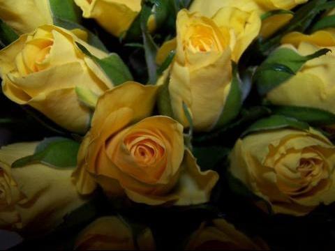 roses%20jaunes