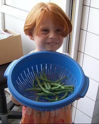 recolte de haricots