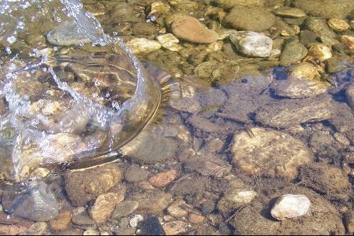 l'eau de la riviere