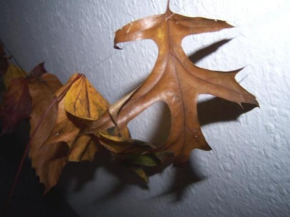 couleurs d'halloween
