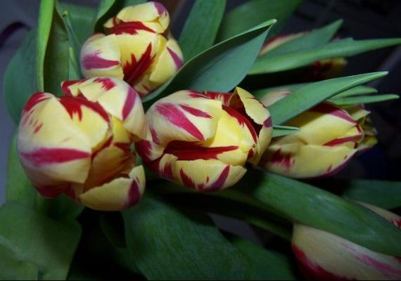 fleurs de l'amour