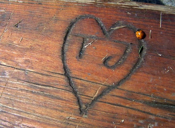 amour coccinelle