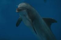 Baudewijn SeaPark 8