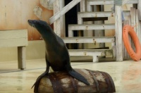 Baudewijn SeaPark 12