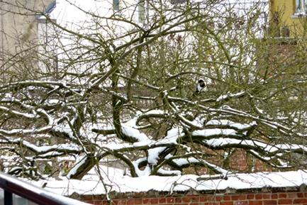 neige mars 2013-3