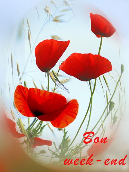 Bouquet-de-coquelicots
