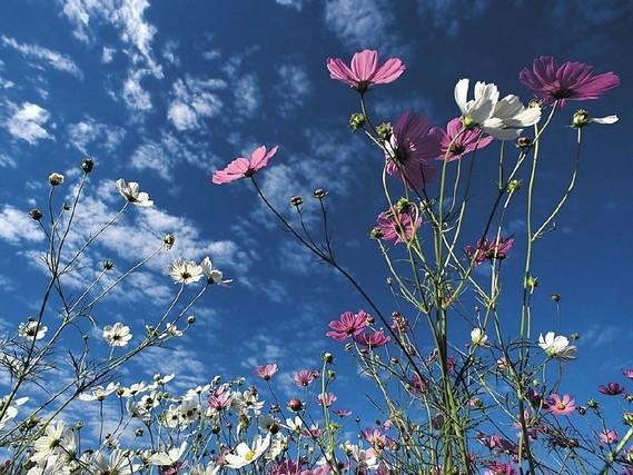 Fleurs-des-champs-2