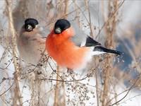 oiseaux hiver