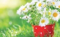 printemps-fleurs-700x434