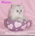 chat bise