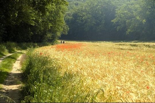 parc-naturel-regional-gatinais-francais-439398