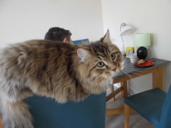Hermes sur la chaise