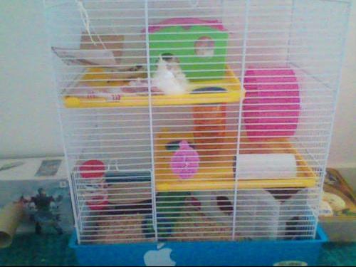 La cage.jpg3.