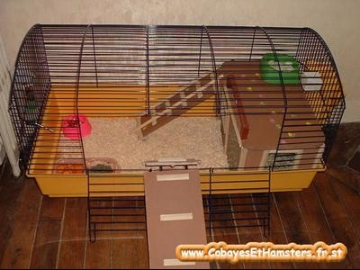 cage cochon d 39 inde hamsters cochons d 39 inde lapins forum animaux. Black Bedroom Furniture Sets. Home Design Ideas