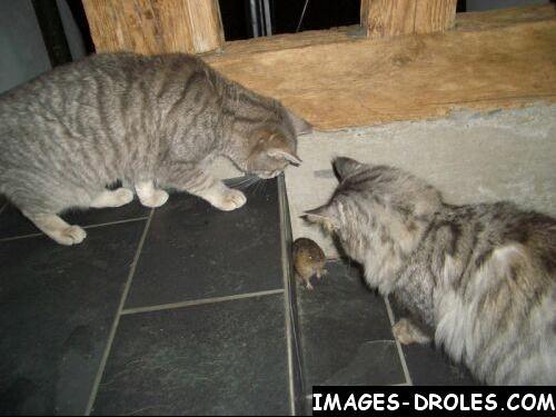 chat-souris-rigolo