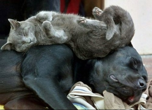 photo%20drole%20chien%20chat