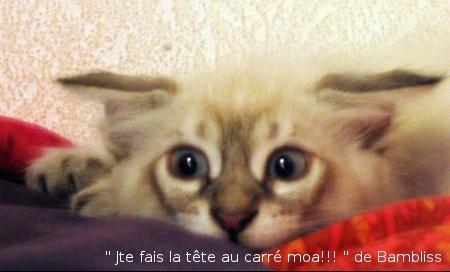 jte_fais_la_tete_au_carre_moa_ambliss